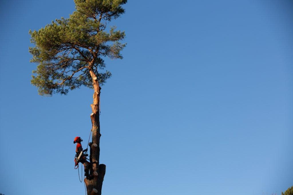 trädfällning Saltsjöbaden, trädfällning nacka, trädfällning Stockholm, trädfällning Karlsborg, trädfällning Skaraborg, trädfällning Skövde, trädfällning Tibro, trädfällning Hjo, arborist nacka, arborist Stockholm, arborist Skaraborg, arborist Karlsborg