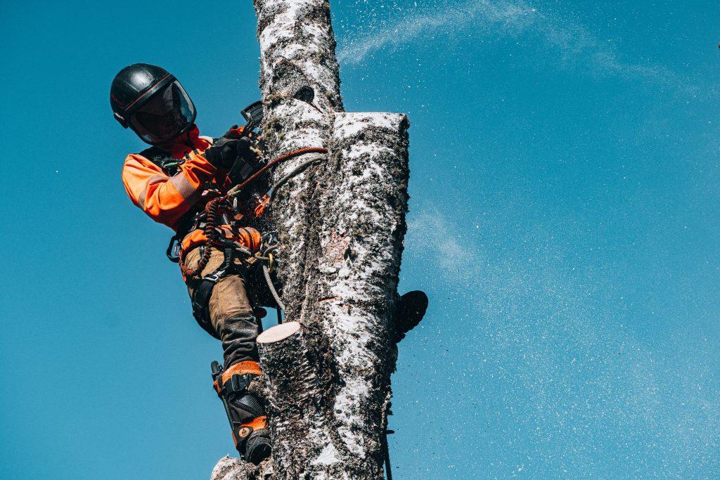 arborist, arborist skaraborg, arborist Karlsborg, trädfällning Karlsborg, trädfällning Skaraborg, trädfällning